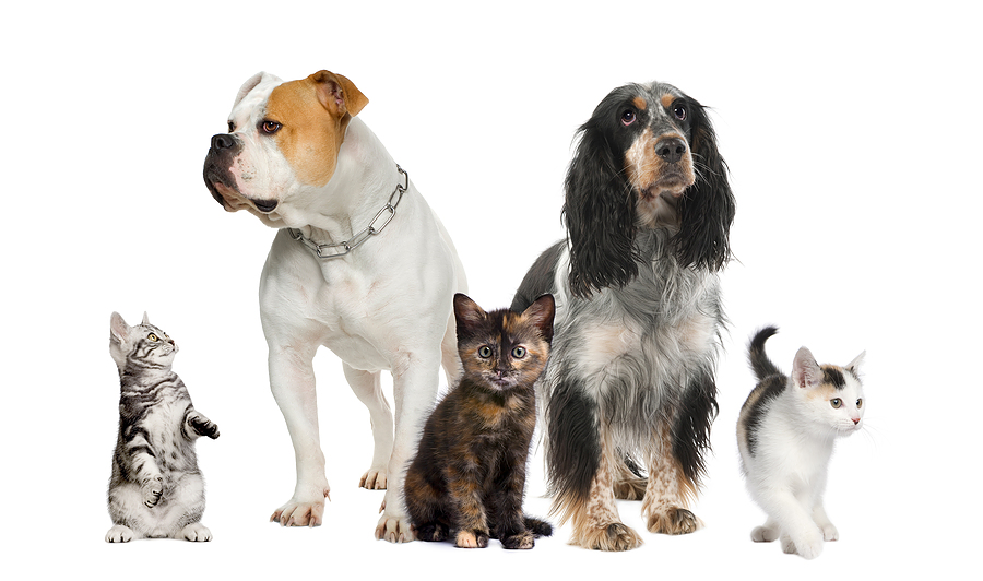 make money petsitting the neighbors pets
