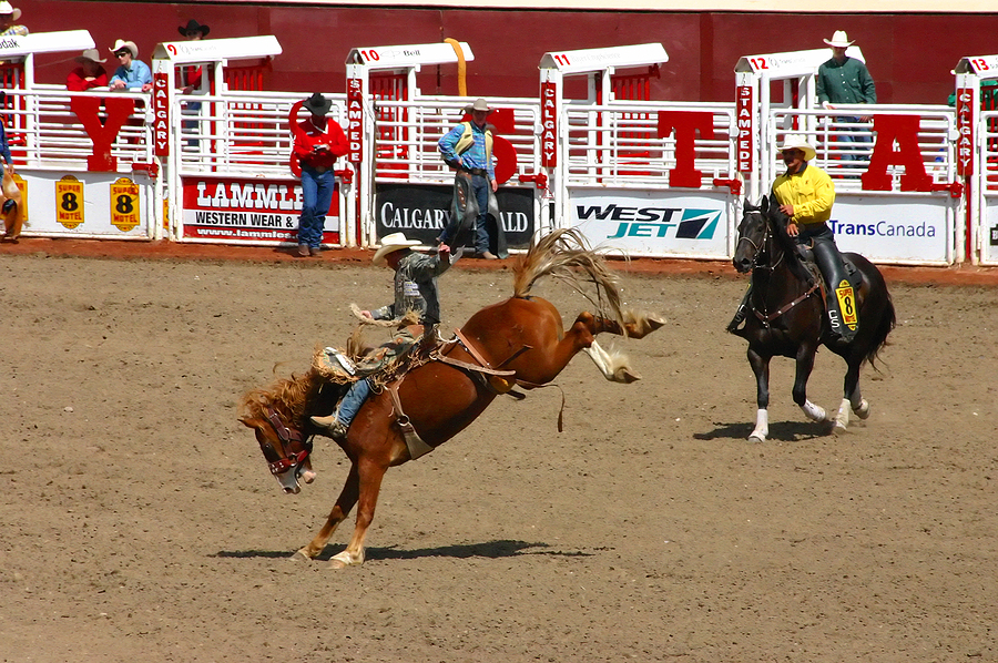 Check out the Calgary Stampede every July in Calgary Alberta