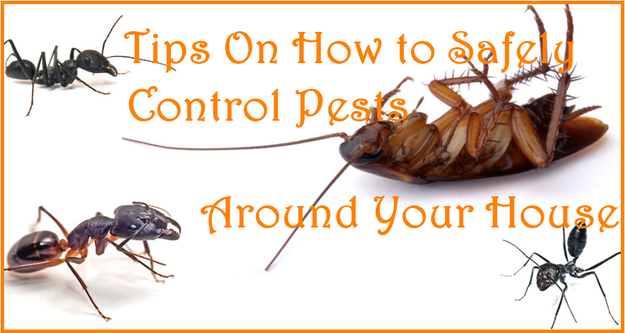 Tips On How to Safely Control Pests Around Your House
